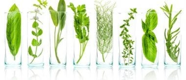 Die Wechseljahre mit Pflanzenextrakten behandeln 1