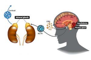 Koffein und Ihr Hormonhaushalt