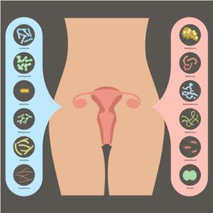 Probiotika für vaginale Gesundheit im Alter 1